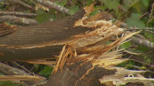 Seattle Parks prepares to restore illegal tree cutting