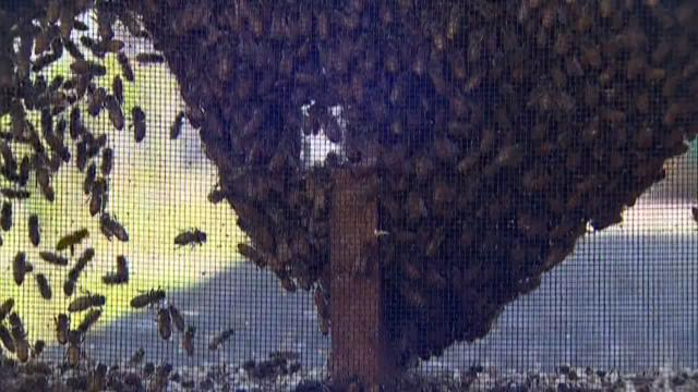 Belleville Honey owner Eric Thompson estimates 22 million