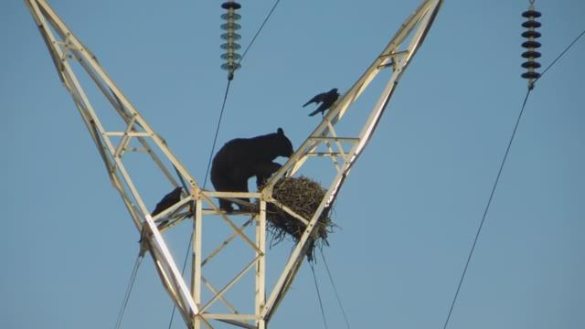 A group of hunters watched as a bear scaled a power