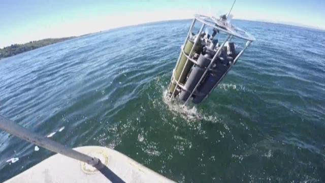 Warm water 'blob' invades Puget Sound