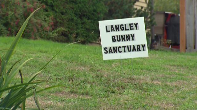 City 'overrun with rabbits' searches for solution